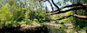Coastal creeks near Abrahams Bosom Reserve.