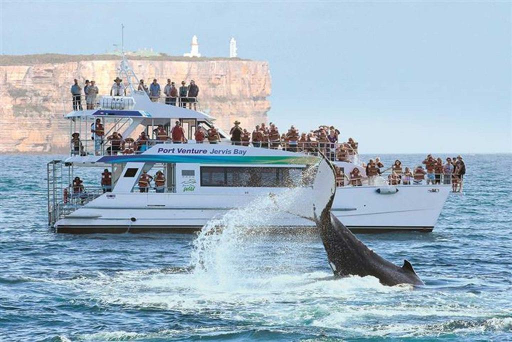 Anchor Bay Motel Whale Cruise